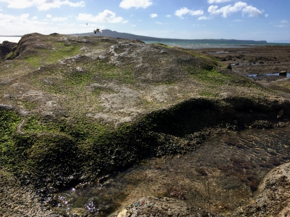 once a molten Scoria rock toffee formation becomes a landmark history of volcanic Auckland..